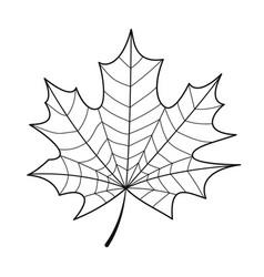 Skeleton maple leaf isolated vector