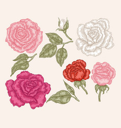 pink red and white rose flowers in vintage style vector image vector image
