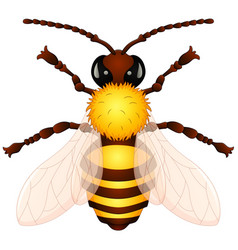 cartoon wasp vector image