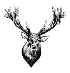 hand drawn sketch deer in black isolated on vector image