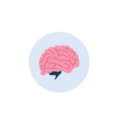 human brain icon or anatomical sign vector image