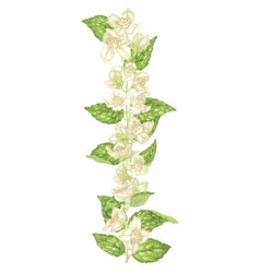 jasmine decor element in vertical branch with vector image