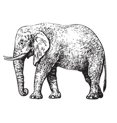 Sketch of walking african elephant style vector