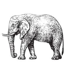 sketch walking african elephant sketch style vector image