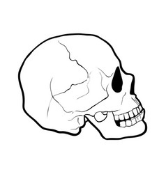 hand drawn human skull vector image