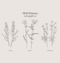 wild flowers vintage set vector image vector image