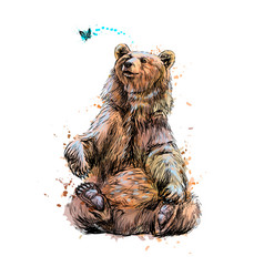 brown bear sitting and playing with butterfly from vector image