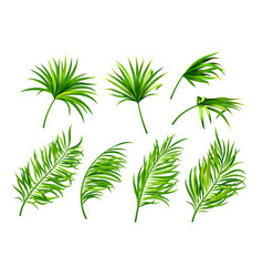 tropical leaves isolated on white background vector image