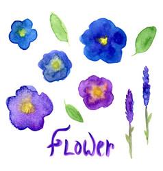 Lavender and viola watercolor collection violet vector