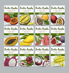set of 12 exotic fruits posters vector image
