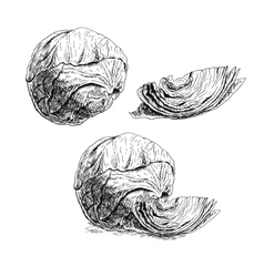 Hand drawn set of cabbage sketch vector