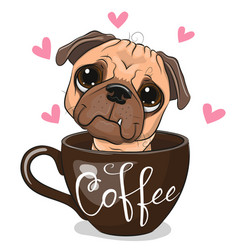 Cartoon pug dog is sitting in a cup coffee vector