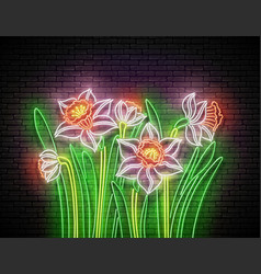 glow bouquet daffodils vector image
