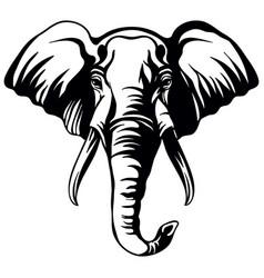 head mascot elephant isolated on white vector image