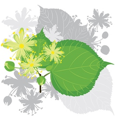 Linden flowers with foliage vector