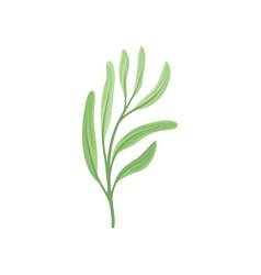 Long leaves on stem on vector