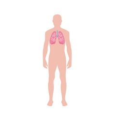 Respiratory system infographic with lungs flat vector