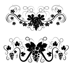 elegant swirls with grapes vector image