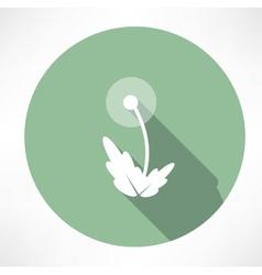 dandelion icon vector image vector image