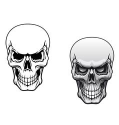Human skulls vector