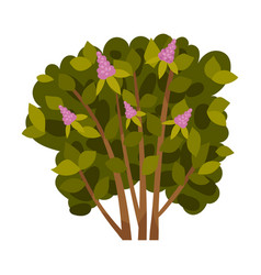 Lilac bush on a white vector
