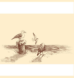 seagulls on the beach sketch vector image
