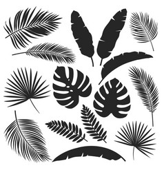 Silhouettes tropical leaves vector