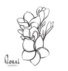 tropical flowers on a white background vector image