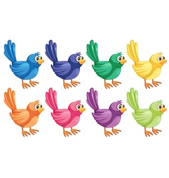 Eight colorful birds vector