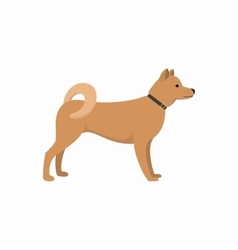 Akita Inu - dog asian breed on white background vector image vector image