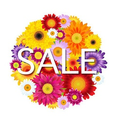 Colorful Gerbers Flowers Ball Sale vector image vector image