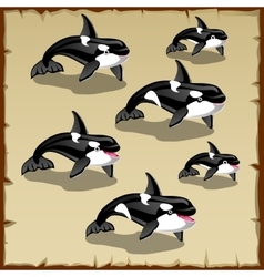 Set of cute killer whales six icons vector image