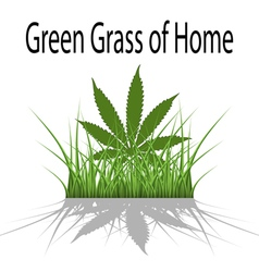 Green Grass of Home vector image vector image