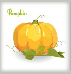 Cartoon pumpkin with leaves vector