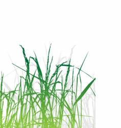 grass silhouette green summer background vector image