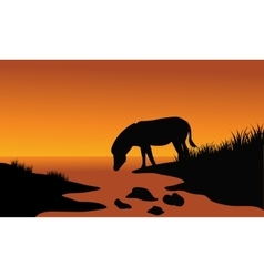 Silhouette of one zebra in riverbank vector