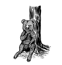 baby little bear sits tree and licks its vector image