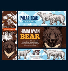 himalayan and polar arctic bears hunting vector image