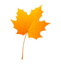 maple leaf icon flat style vector image