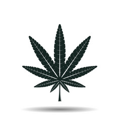 monochrome cannabis leaf sign vector image