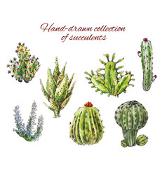 Several hand-drawn cacti of succulents isolated vector