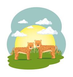 cute leopards couple in the field scene vector image