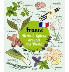 France herbs and spices vector