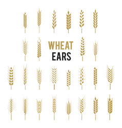 wheat ears icons and logo set cereals icon set vector image
