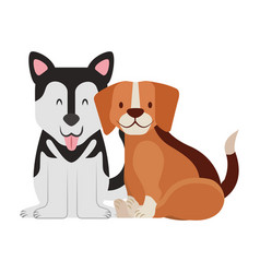 beagle and siberian dogs pet vector image