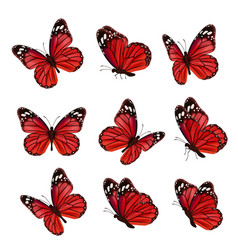 butterflies collection beautiful nature colored vector image