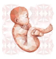 Low poly fetus vector image