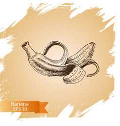 sketch - banana vector image