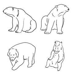 Set of drawings of grizzly bears and white white vector image
