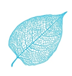 manually drawn leaf skeleton vector image